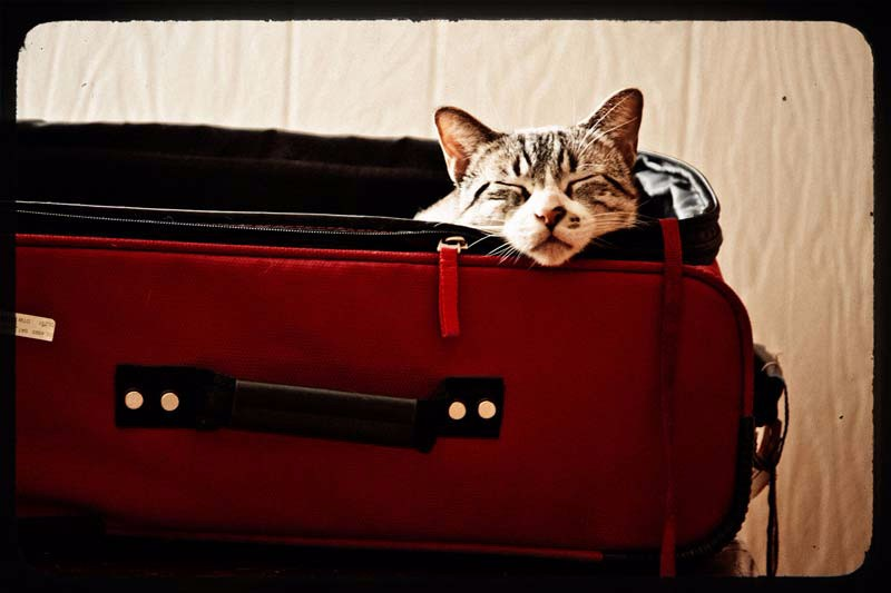Akosh snoozes in a suitcase