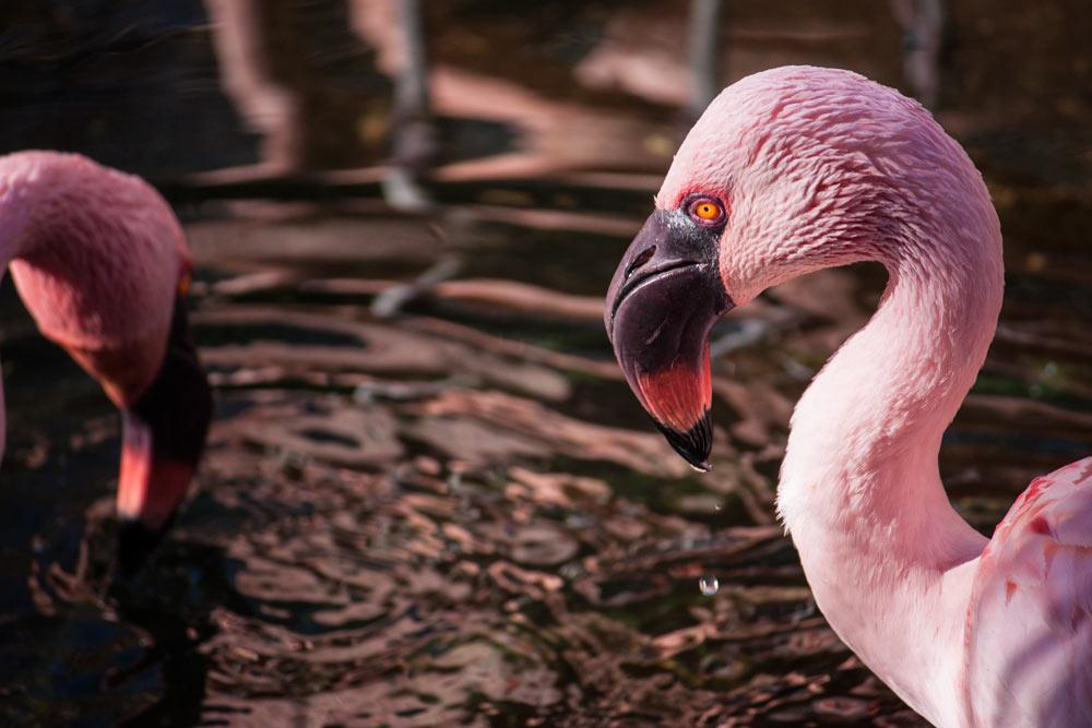 Surly Flamingo 2